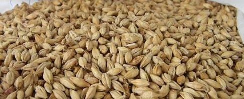 Ricette birra all grain e kit